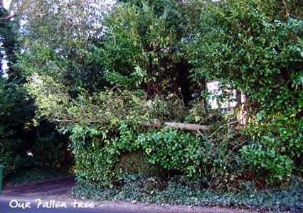 ourfallentree.jpg