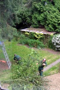 Lumberjacks2.jpg
