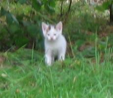 Kittens2.jpg