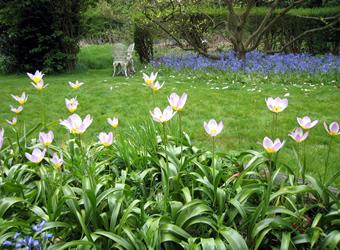 Garden208.jpg