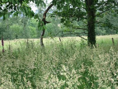 Wilderness3.jpg