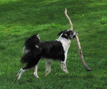 Tilly_stick.jpg