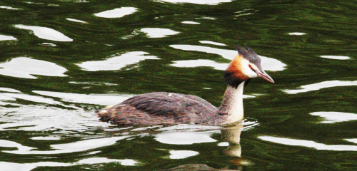 Norfolk5-Grebe_0551.jpg
