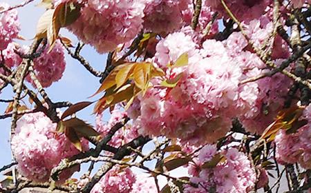 BlossomApril2017.jpg