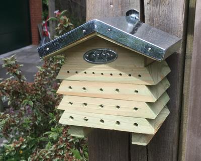 BeekeepingForBeginners.jpg